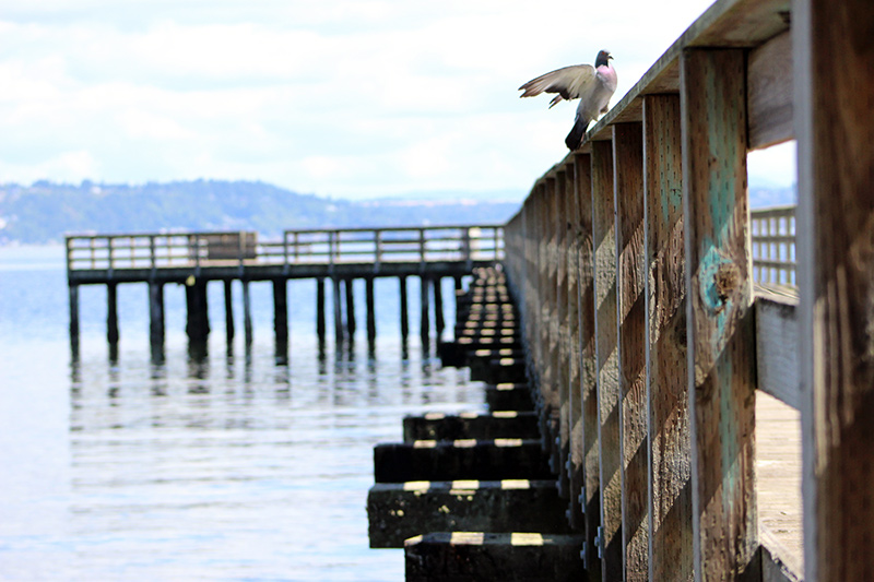 bird-on-pier-web